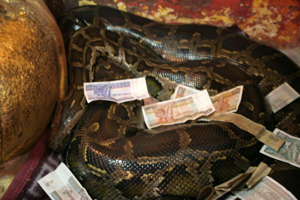 Picture of Snake Pagoda (Paleik) (Myanmar (Burma)): Python covered by Kyat bills in the Snake Pagoda