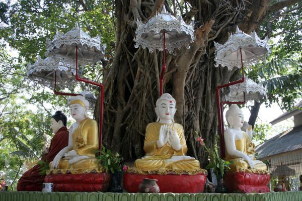 Picture of Yangon (Myanmar (Burma)): Buddha images around a tree on islet in Kandawgyi Lake