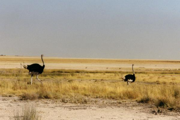 Outskirts of the Etosha Pan | Etosha National Park | Namibia