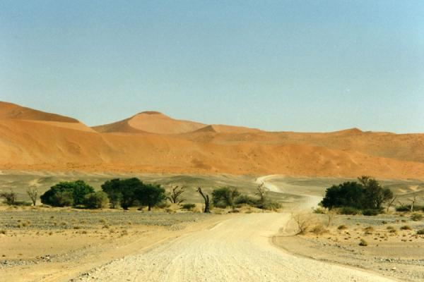 Picture of Road, trees and sand dunes in Namibia