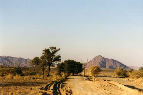 Road with trees and hills in Namibia | Namibian roads | Namibia