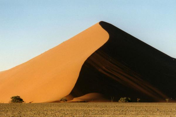 Foto di Namibia (Sharp line of a sand dune with trees at Sesriem)