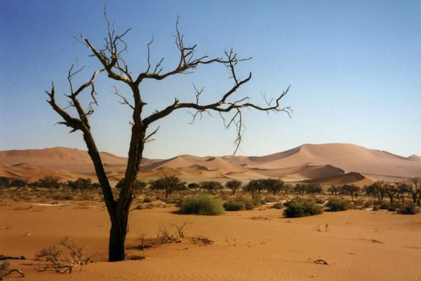 Trees and sand dunes: typical Sesriem landscape | Sesriem | Namibia