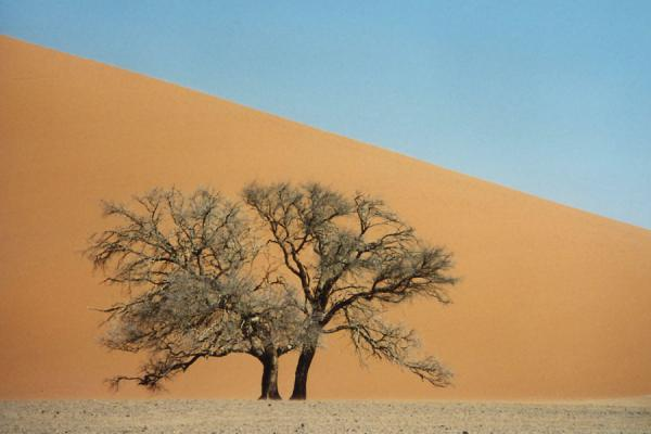 Tree and sand dune at Sesriem | Sesriem | Namibia