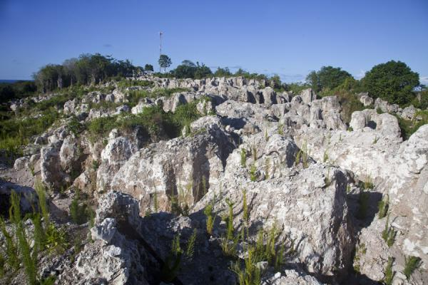Foto de Coral pinnacles with antenna at the highest point of Nauru on Command RidgeAiwo - Nauru