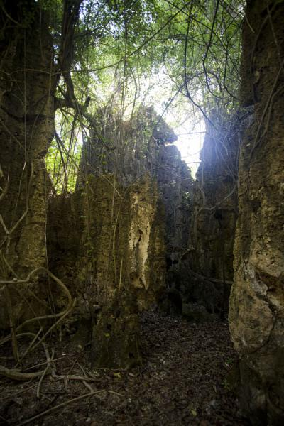 Foto de Corridor marked by vertical walls of coral rock overgrown by treesAnabar - Nauru