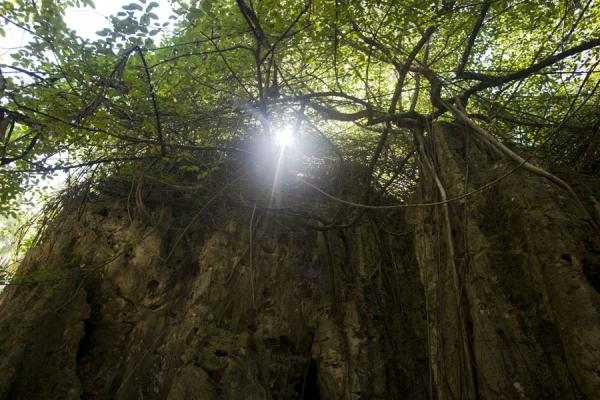 Sun shining through an opening in the vegetation on top of a limestone wall | Hole in the wall hike | Nauru