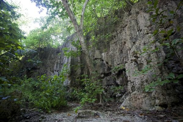 Wall of limestone rock overgrown with trees | Hole in the wall hike | Nauru