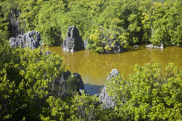 Picture of The two ingredients of the landscape of the hinterland of Anabar: coral rock, forest, and water