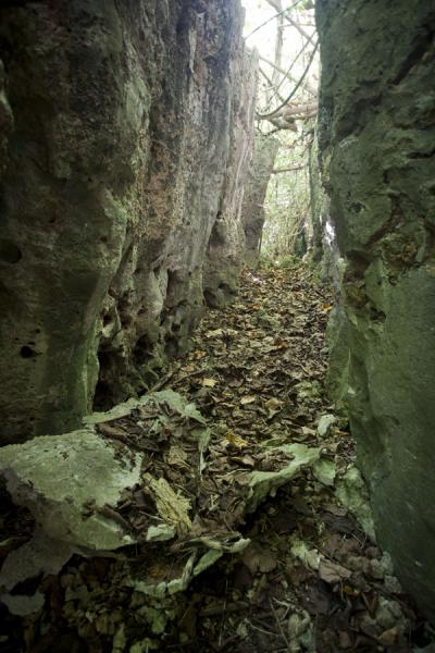 Natural corridor with limestone walls, making you wonder what will be around the corner | Hole in the wall hike | Nauru