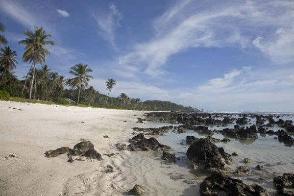 Beach at Anibare bay with palm trees and coral pinnacles | Nauru Coast | Nauru