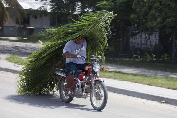 Foto van Riding a motorbike while transporting palm tree leavesNauruaanse mensen - Nauru