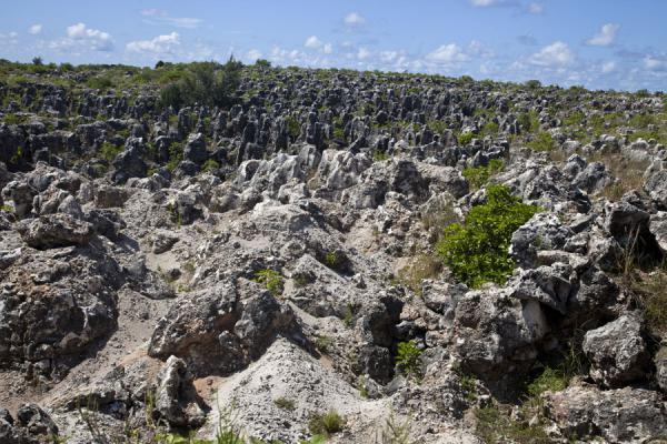 Picture of The Topside landscape consists for a large part of coral pinnacles, remains of the phosphate mining