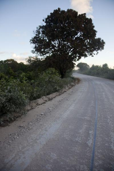 Picture of Old rails not in use anymore on a road on TopsideTopside - Nauru