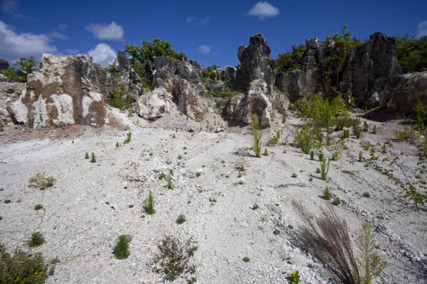 Phosphate mining has defined the landscape of Topside | Topside landscape | Nauru