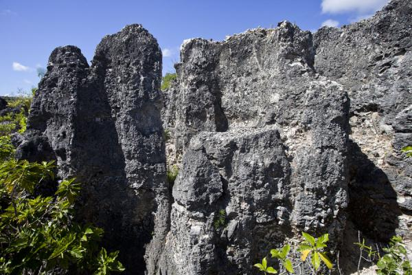 Foto di Close-up of coral pinnacles on TopsideTopside - Nauru