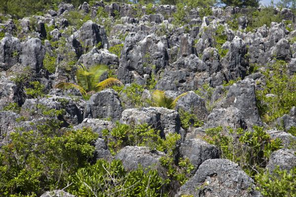 Coral pinnacles with scattered vegetation at Topside | Topside landscape | 诺魯