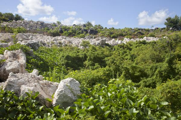 Vegetation trying to regain ground on phosphate mining territory | Paisaje Topside | Nauru