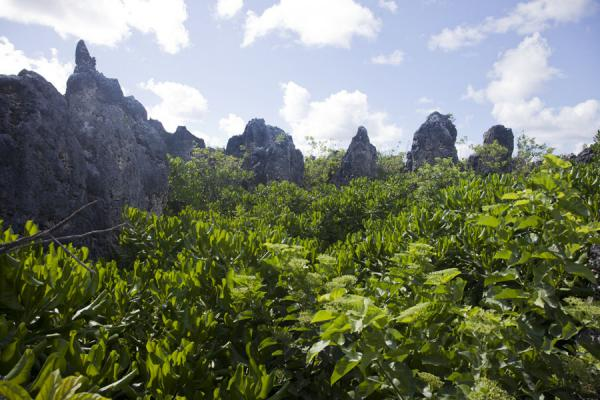 Pinnacles pointing to the sky above vegetation at Topside | Paysage Topside | Nauru