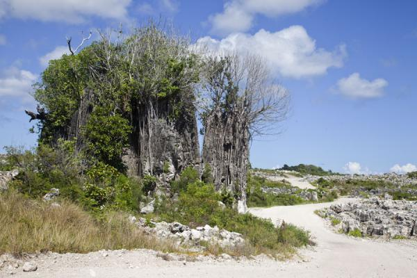 Large coral rock formation covered by trees in central Nauru | Topside landscape | Nauru