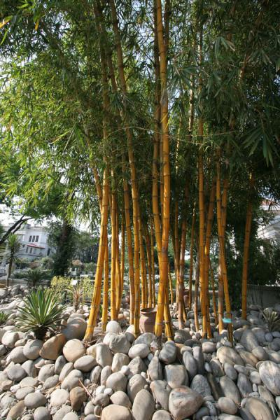 Bamboo in the Garden of Dreams | Garden of Dreams | Nepal