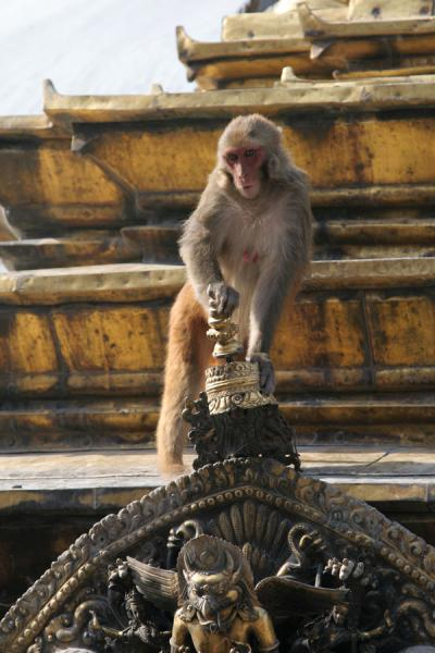 Picture of Swayambhunath temple is dubbed Monkey temple because of the apes around