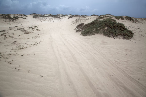 Sandy track through the sand dunes at Arashi | Arashi point nordoest | Antilles Néerlandaises