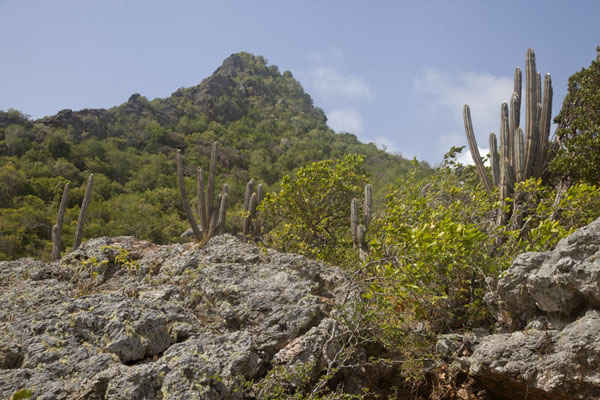 Looking up Christoffelberg with cactuses and rocks in the foreground - 荷兰大小安第列斯群岛 - 北美洲
