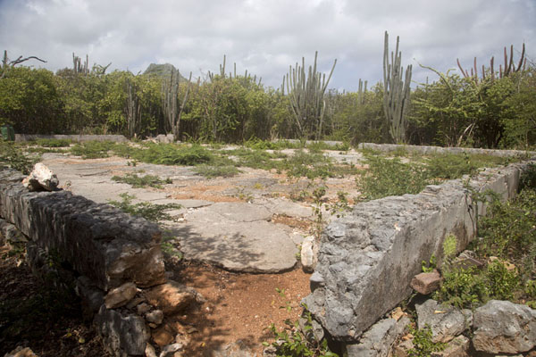 Picture of Christoffelberg (Netherlands Antilles): Christoffelberg in the background of ruins surrounded by cactuses