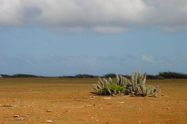 Picture of Landcape of Curacao