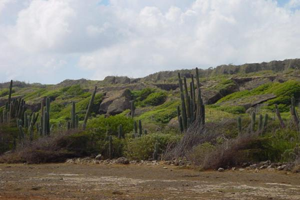 Cacti in a green environment | Landcape of Curacao | Netherlands Antilles
