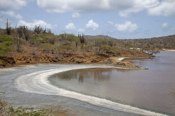 Photo de The shoreline of Saliña SlagbaaiWashington Slagbaai National Park - Antilles Néerlandaises