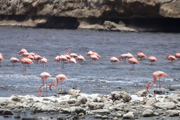 Foto de Flamingoes in Saliña SlagbaaiWashington Slagbaai National Park - Antillas holandesas