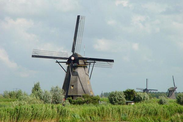 Picture of Kinderdijk: landscape with windmills