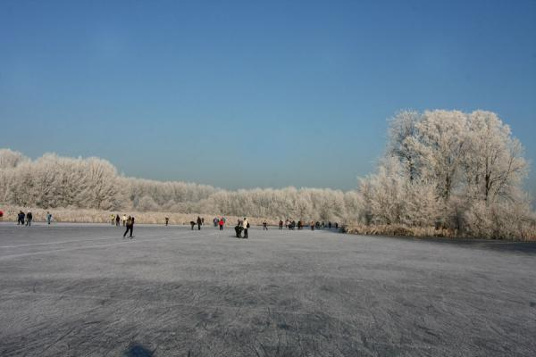 Picture of Natural Ice pastime (Netherlands): Skating on the Rottemeren with trees covered in frost