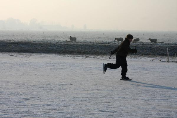 Picture of Natural Ice pastime (Netherlands): Young skater with sheep in the Alblasserwaard
