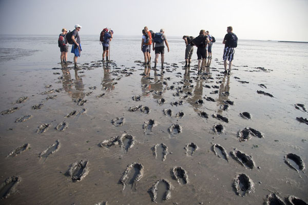 Foto van Hikers making their way through the mudflats just off the coast of FrieslandAmeland - Nederland