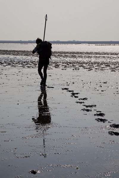 Picture of Guide with stick on the mudflat