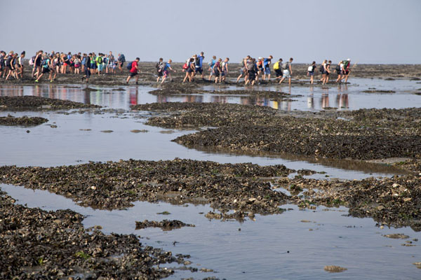 Foto van Islets formed by mussels offer some easier walkingAmeland - Nederland