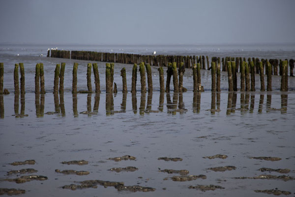 Picture of Lines of wooden poles just off the coast at low tide