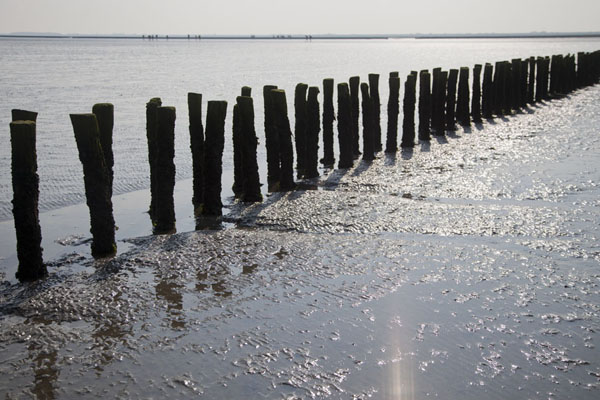 Wooden poles can be found near the coast and were once used to demarcate land just off the coast | Mudflat hiking Ameland | Netherlands