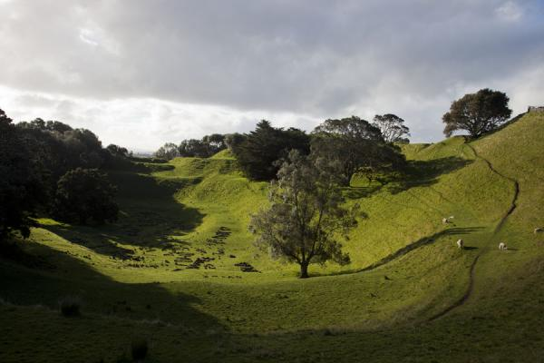 Trees and grass grow abundantly on One Tree Hill | Auckland Vulkaangebied | Nieuw Zeeland