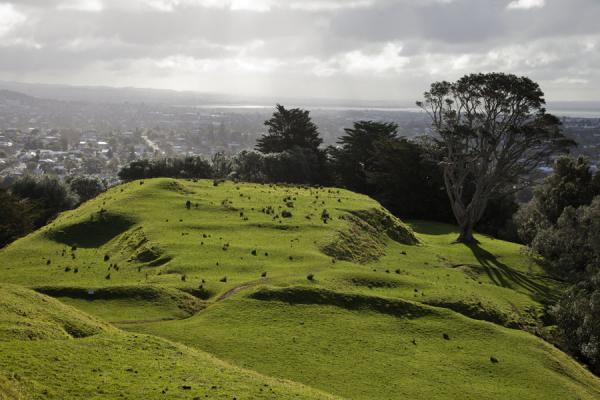 Foto di Terraced landscape can clearly be seen on One Tree HillArea volcanica di Auckland - Nuova Zelanda