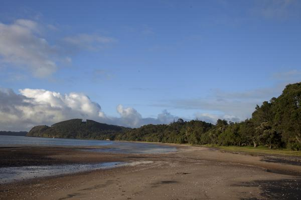 Beach with rainforest in the southwest of Waitakere Park | Waitakere Ranges Regional Park | Nieuw Zeeland