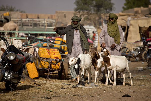Tuaregs at the goat section of the cattle market | Marché de bétail de Agadez | Niger