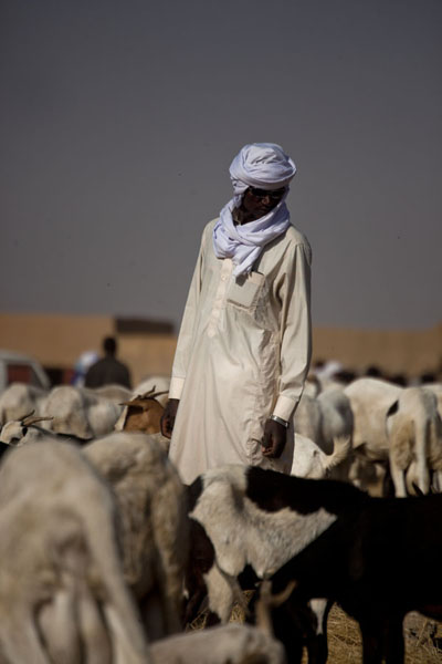 Tuareg inspecting the goat for sale at the cattle market of Agadez | Marché de bétail de Agadez | Niger