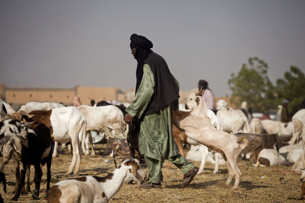 Tuareg leaving the cattle market with a goat | Marché de bétail de Agadez | Niger