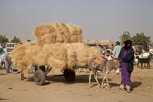 Donkey cart bringing hay to the cattle market | Mercato del bestiame di Agadez | Niger