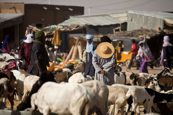 Waiting for customers  to buy a goat at the cattle market | Marché de bétail de Agadez | Niger