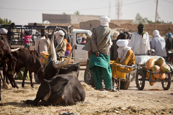 Scene at the cattle market of Agadez | Mercado de ganado de Agadez | Niger